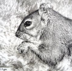 Squirrel original charcoal drawing. $75.00, via Etsy.