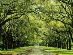 An avenue of oaks and Spanish moss leads visitors to the ruins of Wormsloe—the estate of Noble Jones. Jones, one of Georgia's first settlers, was a physician, carpenter, constable, Indian agent and a member of the Royal Council.