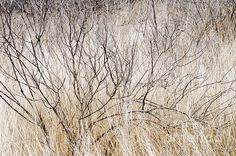 Dry Grasses And Branches. A low lying shrub and dried grasses complement each other in this natural scene. El Charco del Ingenio, Jardin Botanico, San Miguel de Allende, Mexico.  Fine Art Photography  http://rob-huntley.artistwebsites.com © Rob Huntley