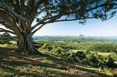 Insider Guide: Sunshine Coast Hinterland #qldblog