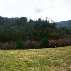 【mywanderlab】さんのInstagramをピンしています。 《今天是台灣的開工日,意味著上班族們結束過年假期要開始努力工作了。但我還是要來為跟大家分享 奧萬大國家森林遊樂區~ 位於台灣的南投 南投有很多美麗的風景。 例如:暨南大學、合歡山、奧萬大以及清境農場。 喜歡大自然的朋友們~可以到這走走看看,欣賞大自然。 #奧萬大#楓葉#大自然#森林#台灣#寶島#taiwan#visit#love#like#picnic#forest#beauitful#follow#me#place#family#tbt#ootd#travel#nature#back#work#flowers#birds#fresh#air》
