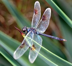 Flickr Search: dragonflies | Flickr - Photo Sharing!