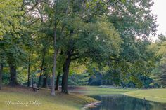 Bench overlooking the pond at Prairie Creek Park in Vigo County Indiana captured by Wandering Ways Photography 2016