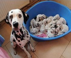 animals moms dads 23 Daily Awww: Animal mommas and the poppas (29 photos)