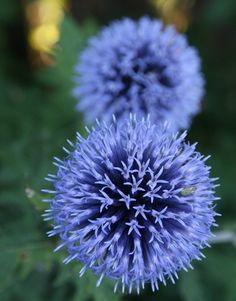 for Anne...blue flowers~garden things :)