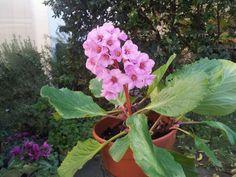 Flower of zia Maria Garden, Flowers, Plants, House, Garten, Home, Lawn And Garden, Gardens, Plant
