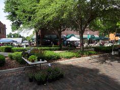Plants Spring Fever, Winter Garden, Sidewalk, Bloom, Florida, Plants, Side Walkway, The Florida, Walkway