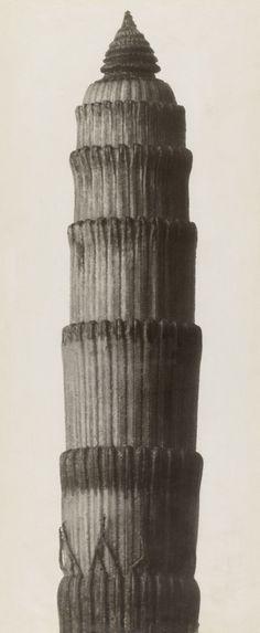 Exhibition: 'Karl Blossfeldt. From Nature's Studio' at Pinakothek der Moderne, Munich | Art Blart Karl Blossfeldt, Dr Marcus, New Objectivity, Natural Form Art, Museum, Studio S, Vintage Photography, White Photography, Munich