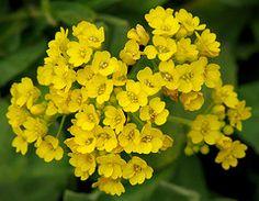 Φυσική συνταγή που θα εξαφανίσει για πάντα την ανεπιθύμητη τριχοφυΐα από το πρόσωπό σας!!! Μυστικά oμορφιάς, υγείας, ευεξίας, ισορροπίας, αρμονίας, Βότανα, μυστικά βότανα, Αιθέρια Έλαια, Λάδια ομορφιάς, σέρουμ σαλιγκαριού, λάδι στρουθοκαμήλου, ελιξίριο σαλιγκαριού, πως θα φτιάξεις τις μεγαλύτερες βλεφαρίδες, συνταγές : www.mystikaomorfias.gr, GoWebShop Platform Botanical Gardens, Garden Plants, Planting Flowers, Beauty Hacks, Herbs, Healthy Recipes, Herb, Healthy Eating Recipes, Healthy Food Recipes