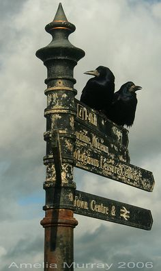 Crows on a sign in Irvine, scotland
