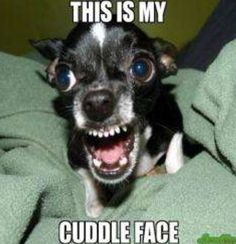 This is definitely Talula Belle's cuddle face to everyone except for me! Lol...