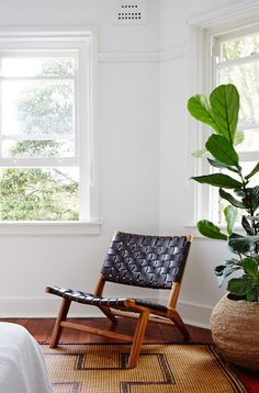 Great chair and indoor plant