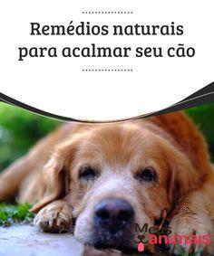 Remédios naturais para acalmar seu cão   Temos que nos lembrar que existem ervas para #tranquilizar nossos #cães e, também, outros #remédiosnaturais para situações que os deixam nervosos. #Saúde