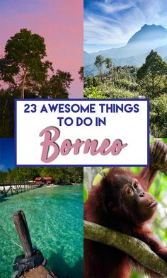 23 of the Best things to do in Borneo in Sabah, Sarawak, Kalimantan and Brunei. Covers both Malaysian and Indonesian Borneo. Find out about the best activities in Borneo and the best places to visit to make your backpacking Borneo trip just awesome!