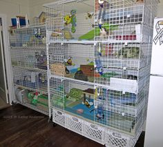 Shelving unit cage (on left): 2' x 4'  2 x 4 grid c and c cage on right: on milk cartons with wheels added