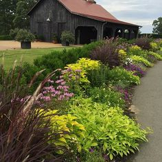 The front flower borders are showing out despite the heat...#provenwinners #sponsored the  @provenwinners plants are really performing at #mossmountainfarm #supertunias #summer #beattheheat #arkansas #comeseeus #artofthegarden #beautytransformsus