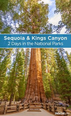 Visit the highlights of Sequoia National Park & Kings Canyon in two days with this handy itinerary featuring a good mix of driving, hiking, & sightseeing. #nationalparks #california