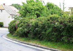 Derartige grüne Schallschutzmauern sind ein effektiver Lärmschutz.