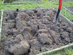 Przekopanie i wzbogacenie ziemi jesienią, przyniesie nam bardzo wiele korzyści na wiosnę. Po zbiorach w warzywniku niewiele już zostanie, więc jest to najlepszy czas na przygotowanie gleby na kolejny sezon. | http://ZielonaTerapia.pl/blog/przygotowujemy-ziemie-w-warzywniku-na-nastepny-sezon/
