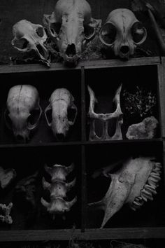 """Marie still could get over the fact that Merris had chosen Necromancy as her speciality. Crane, Animal Bones, Witch Aesthetic, Necromancer, Animal Skulls, Skull And Bones, Skull Art, Dark Art, Witchcraft"