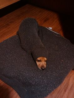 Interesting dog fact of the week: In ancient China, people used to keep warm by putting dogs up their sleeves.