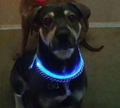 Dog Collar BLUE LED light via Paracord survivalist armband shop. Click on the image to see more!