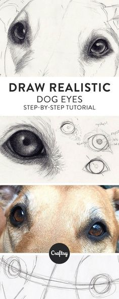 Drawing Pencil Portraits - Drawing a realistic dog starts with the eyes! Learn about the structure of a dog's eye and get a step-by-step tutorial for how to draw dog eyes on Craftsy! #DogDrawing #drawingrealistic #realisticdrawings Discover The Secrets Of Drawing Realistic Pencil Portraits