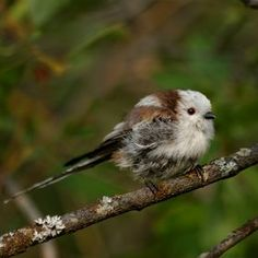 Photo Long-tailed Tit by Artem Kreo on 500px