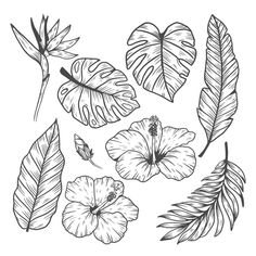 Tropical leaf and flower collection , Leaf Drawing, Floral Drawing, Plant Drawing, Leaf Outline, Flower Outline, Flower Art, Outline Drawings, Tattoo Drawings, Art Drawings
