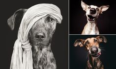 Elke Vogelsang is a professional photographer based in Hildesheim, Germany. In her spare time she snaps photographs of her dogs Noodles, Ioli and Scout.
