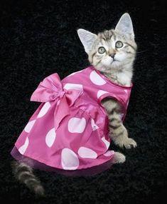 Resultado de imagem para roupas de festa para gatos