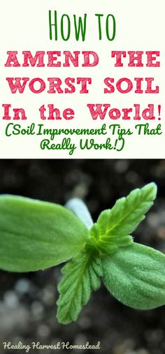 Do you have poor soil? Is it hard for anything to grow where you live? Here are all the things you need to know to improve you soil. How to amend your soil so you can have the BEST garden in the neighborhood---learn about all the ways to start amending and improving your soil!