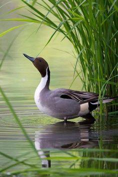 flying of birds Pond Life, Bird Drawings, Bird Pictures, Belleza Natural, Wildlife Art, Bird Art, Bird Feathers, Beautiful Birds, Animal Photography