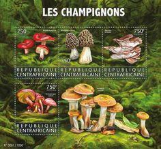 CA15608a Mushrooms (Russula rhodopoda, Morchella esculenta, Pleirotus ostreatus, Tricholomopsis rutilans)
