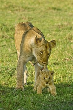 I'm in love with that cub