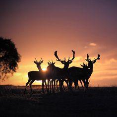reindeer....I wish I took this.