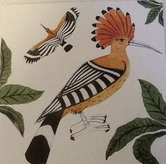 'Hoopoe' by Beatrice Forshall Hoopoe Bird, Tropical Birds, Beautiful Birds, Beautiful Things, Calligraphy Art, Types Of Art, Illustrations, Bird Art, Adult Coloring