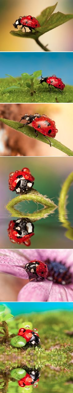 Mariquita bajo la lluvia!  Ladybug under the rain