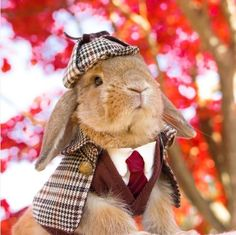 These 24 Halloween Pet Costumes may Just be Better than Your Own! Sherlock Holmes the Rabbit Pet Halloween Costumes, Animal Costumes, Pet Costumes, Costumes For Rabbits, Woman Costumes, Pirate Costumes, Couple Costumes, Group Costumes, Couple Halloween