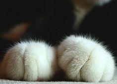 hand_cat01