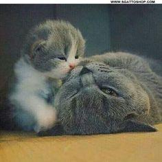 Mammina, mammina... mi pettini bene i peletti della testa che anche io voglio essere bello come te?