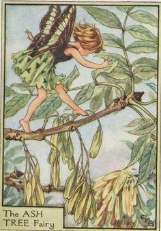 'THE ASH TREE FAIRY' c.1930 by Cicely Mary Barker  | eBay