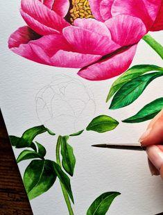 Peony watercolor illustration by Studio Sonate in process Watercolor Illustration, Peony, Studio, Abstract, Artwork, Prints, Instagram, Design, Summary