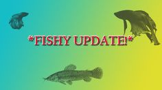 FISH ROOM UPDATE 13.07.16 |FISH RESCUE JOB|DW Aquatics