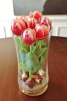 to Force Tulip Bulbs in Water - Sand and Sisal I think even I could grow tulips like this even though I don't have a green thumb at all!I think even I could grow tulips like this even though I don't have a green thumb at all! Indoor Garden, Garden Plants, Indoor Plants, Outdoor Gardens, Home And Garden, Herb Garden, Indoor Flowers, Bulb Flowers, Easy Garden