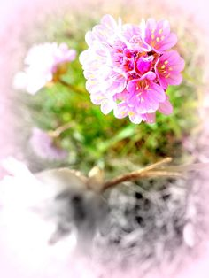 Hopefully Famous Artists, Art Pieces, Framed Prints, Artwork, Nature, Flowers, Pictures, Image, Beauty