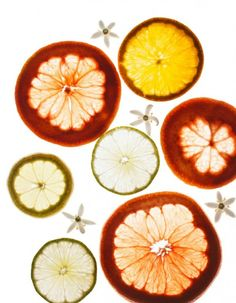 by Maren Caruso  #foodstyling #foodphotography #orange #fruit