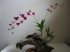 ikebana and driftwood - Bing images Orchids Garden, Orchid Plants, Air Plants, Indoor Plants, Hanging Orchid, Diy Hanging, Ikebana, Mini Orquideas, Plante Carnivore