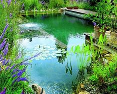 Swimming Pool Cost, Building A Swimming Pool, Swimming Pool Designs, Garden Swimming Pool, Natural Swimming Ponds, Natural Pond, Fish Pool, Garden Pond Design, Small Pool Design