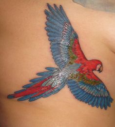 Just got this tattoo about 4 hours ago this evening. Took over 2.5 hours and was my first tattoo ever. Thanks so much to Bald Bill over at Yankee Tattoo in Burlington, Vermont for making my first tattoo such a beautiful one! I'll admit it hurt a lot on the ribcage but it was worth it. Scarlet Macaws are beautiful birds and this one represents my trip abroad during college being a huge step for me in my life. I'm so happy with the way it turned out!!